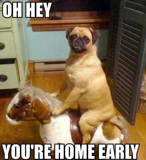 Dog Meme Oh Hey Your Home Early