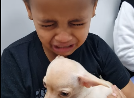 boy cries after holding cute puppy