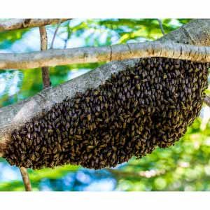 hiking-bees-365213_300