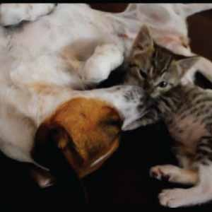 kitten eating dog featured pic