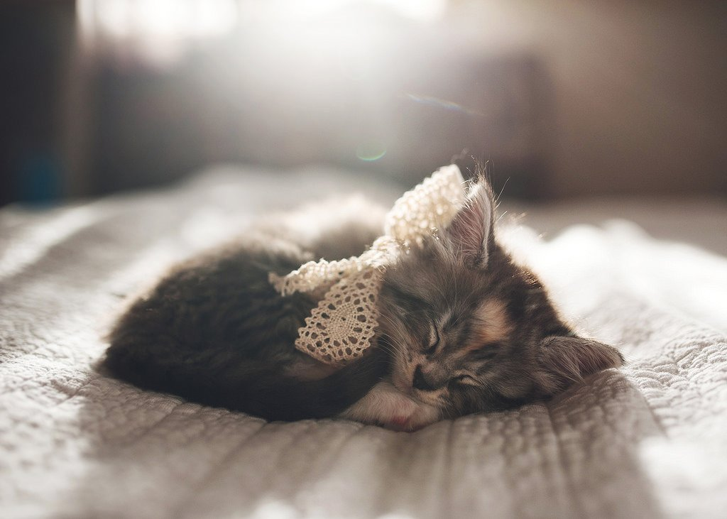adorable sleeping kitten with lace bow