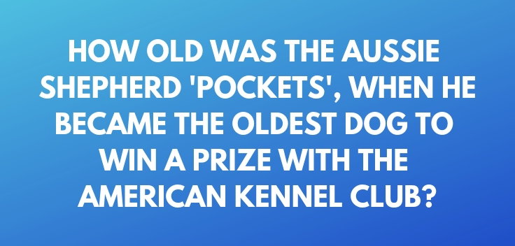 How old was the Aussie Shepherd 'Pockets', when he became the oldest dog to win a prize with the American Kennel Club