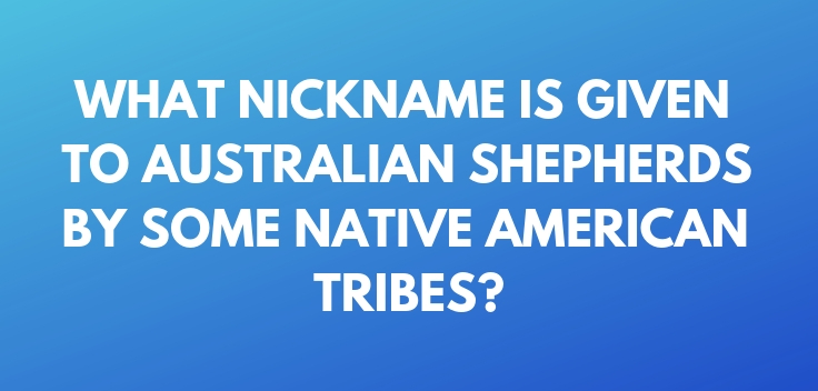 What nickname is given to Australian Shepherds by some Native American tribes