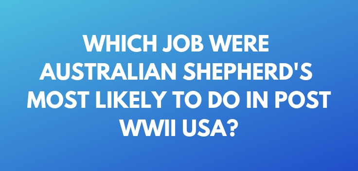 Which job were Australian Shepherd's most likely to do in post WWII USA