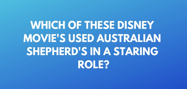 Which of these Disney Movie's used Australian Shepherd's in a staring role
