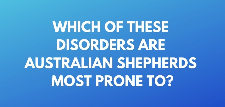 Which of these disorders are Australian Shepherds most prone to
