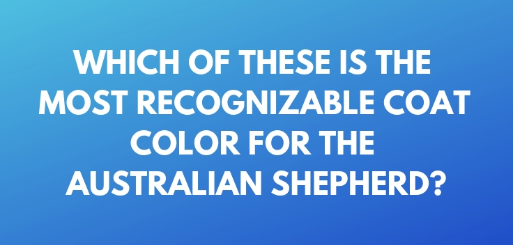 Which of these is the most recognizable coat color for the Australian Shepherd